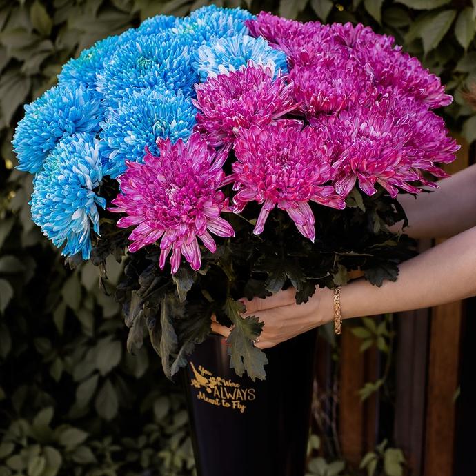фото крашеной хризантемы Магнум